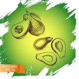 Avocado di schizzo dell'illustrazione di vettore verdura Immagini Stock