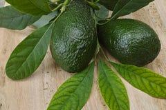 Avocado fresco verde Fotografia Stock Libera da Diritti