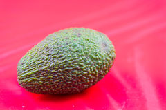 Avocado fruit. Green avocado fruit on a red background Royalty Free Stock Image