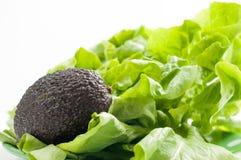 Avocado fruit and green salad Royalty Free Stock Photography