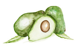 Avocado fruit isolated. Handmade watercolor  painting illustration on a white paper art background Stock Photo