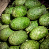 Avocado fruit in local market Royalty Free Stock Images