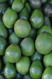 Avocado fruit on Traditional Market Royalty Free Stock Photography