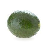 Avocado fruit. On white background Stock Images
