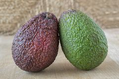 Avocado fruits, green and red stock photography