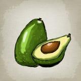 Avocado, half of avocado, avocado seed. Vector illustration of fruit avocado Stock Photo