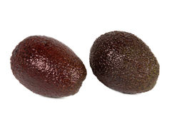 avocado hass Obrazy Stock
