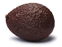 Avocado Hass Bilse, brown Persea americana, paths. Whole brown Hass or Bilse avocado, Persea americana. Clipping paths, shadow separated Royalty Free Stock Photos