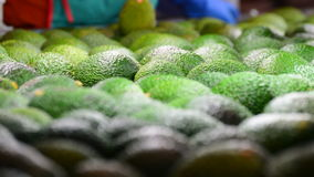 Avocado hass fruit food in close up rolling in packaging line stock video footage