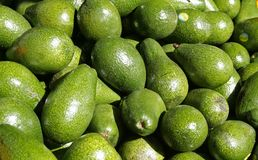 Avocado heap in the market. Stock Photo