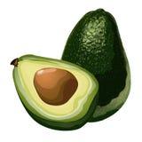 Avocado, intero verdi e fetta con cereale Frutta esotica oleosa, alimento di vettore illustrazione vettoriale
