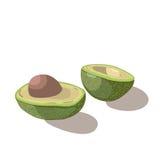Avocado isolated on white background. Vector illustration Stock Image