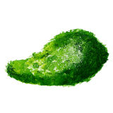 Avocado isolated on white background watercolor painted Royalty Free Stock Photo