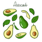 Avocado and leafs in sketch style Stock Images