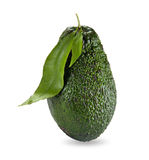 Avocado with leaves Royalty Free Stock Photography