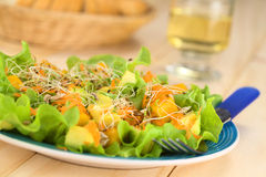 Avocado and Mango Salad Stock Photo
