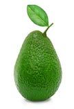 Avocado maturo verde fresco Fotografia Stock Libera da Diritti