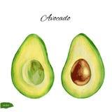Avocado, metà di di avocado, illustrazione dell'acquerello su fondo bianco, alimento tropicale esotico disegnato a mano Fotografia Stock