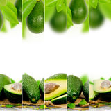 Avocado mix Stock Photography