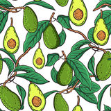 Avocado pattern Stock Images