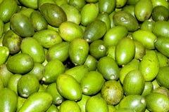 Avocado pears Stock Photos