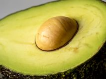 Avocado, persea americana Immagini Stock