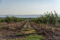 Free Avocado Plantation Royalty Free Stock Photo - 123289275