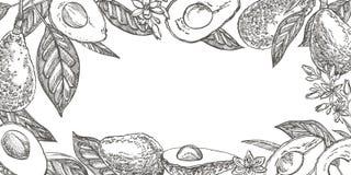 Avocado ręk patroszone ilustracje Tropikalna owoc grawerująca lato stylowa ilustracja zdjęcie royalty free