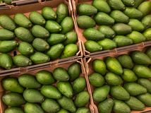Avocado for sale at the supermarket Stock Image