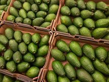 Avocado for sale at the supermarket Royalty Free Stock Photography