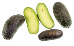 Avocado Seedless Fruit. Seedless avocado, Persea americana, is a green skinned, fleshy body fruit with an elongated shape and without any seed Stock Photography