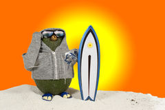 Avocado - Surfer Stock Images