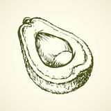 Avocado. Vector drawing Stock Image