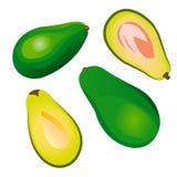 Avocado. Vector Avocado fruit isolated on a white background Stock Image