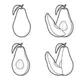 Avocado. Vector Illustration Hand Drawn Fruit Cartoon Art stock illustration