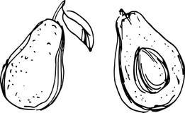 Avocado. Vector Illustration Stock Image