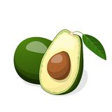 Avocado vector isolated on white background. Stock Images