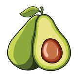 Avocado Vector vector illustration