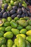 Avocado in Villa de leyva Colombia Stock Photography