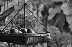 Avocado w koszu Obraz Stock
