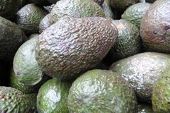 Avocado w Tegucigalpa Honduras rynku Fotografia Stock