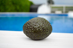 Avocado on a water background. Stock Image