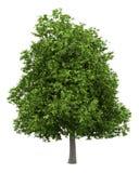 Avocadoboom op wit wordt geïsoleerd dat vector illustratie
