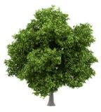 Avocadoboom op wit wordt geïsoleerd dat stock illustratie
