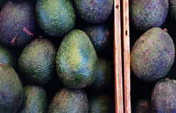 Avocados. This off-center shot of two crates of avocados was taken at the Embarcadero farmer's market in San Francisco Stock Image