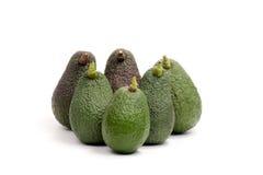Avocados Stock Photography