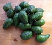 Avocados Lizenzfreies Stockfoto