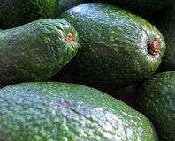 Avocados Stockfotografie