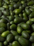 Avocados Lizenzfreie Stockfotos