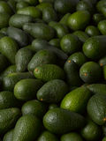 Avocados Stock Photography